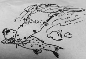 カワネズミ図